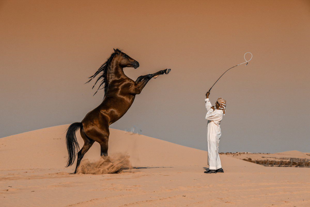 "Winner, Saudi Arabia. ""Horse Motion"". A horse breeder plays a horse in one of the stables of Abu Dhabi, United Arab Emirates Abbas Alkhamis, Saudi Arabia, Winner, National Awards, 2020 Sony World Photography Awards"